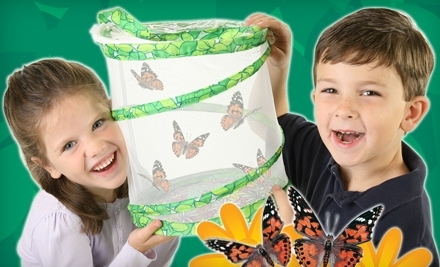 Butterfly Garden with Live Caterpillars or Insects and Accessories from Insect Lore