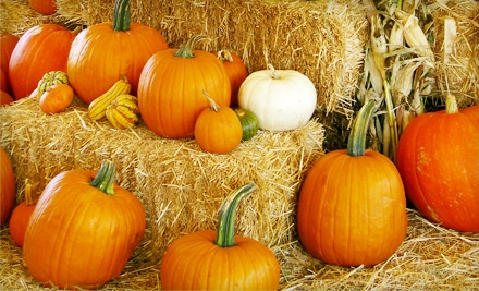 $5 for One $10 Pumpkin at Big Wave Dave's Pumpkin Patch