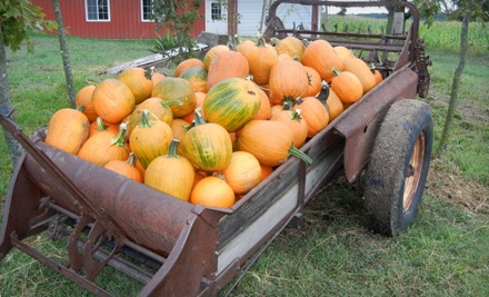 Pumpkin-Patch Outing for Two or Four at Renyer's Pumpkin Farm