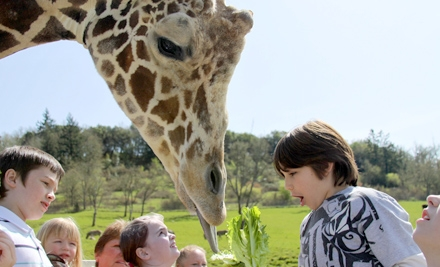 Drive-Through Wildlife Safari for Two Adults or Two Children in Winston (Half Off)