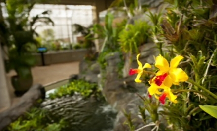 Nature Outing for Two or Four to Denver Botanic Gardens (Up to Half Off)
