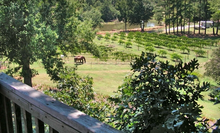 Winery Tour and Tasting for Two, Four, or Six at Treehouse Vineyards in Monroe (Up to 60% Off)