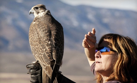 Hawk Walk for One or Falconry Lesson for Two from West Coast Falconry in Marysville (Half Off)