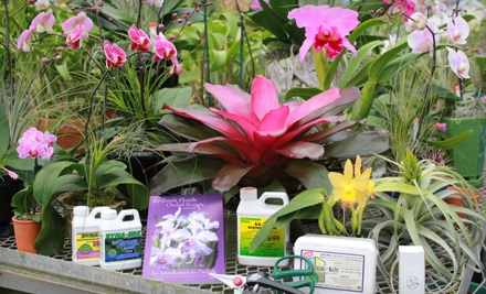 Plants and Gardening Supplies or Orchid Arrangements at Sundance Orchids & Bromeliads (Half Off)