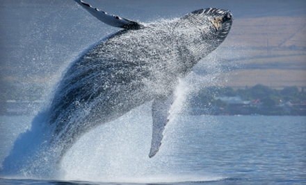 Boat Tour from Cape May Whale Watch & Research Center Operated by The Starlight Fleet (Up to 55% Off). Four Options Available.