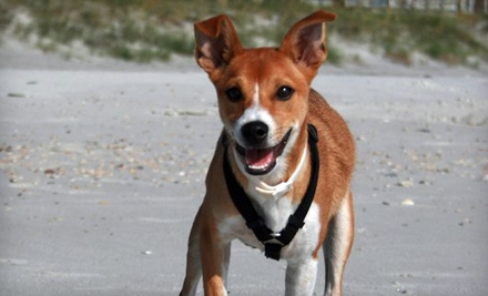$38 for Pet Adoption Fees at Jacksonville Humane Society (Up to $125 Value)