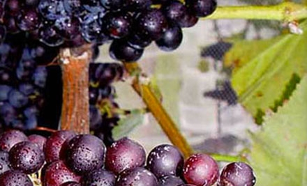 $5 for a Winery Tour, Wine Tasting, and Logo Wineglass at Newport Vineyards ($10 Value)