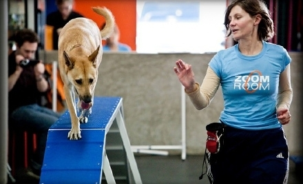 Dog-Training Class or Six-Week Course at Zoom Room in Coconut Creek (Up to 57% Off)