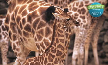 Child or Adult Game-Viewing Safari Outing at Giraffe Ranch in Dade City (52% Off)