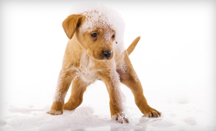 $2 for a Self-Serve Dog Wash at Squeaky Clean Car Wash ($8 Value)