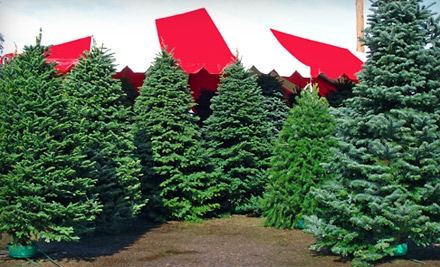 $10 for $20 Worth of Christmas Trees and Holiday Wreaths at Moon Valley Nursery Las Vegas. Two Locations Available.