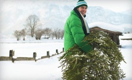 $59 for Hand-Delivered Fraser Fir Christmas Tree from Five Star Holiday Decor ($159 Value)